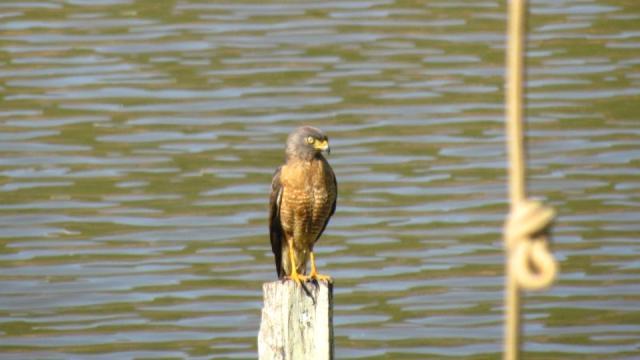 Pássaro livre no Lago